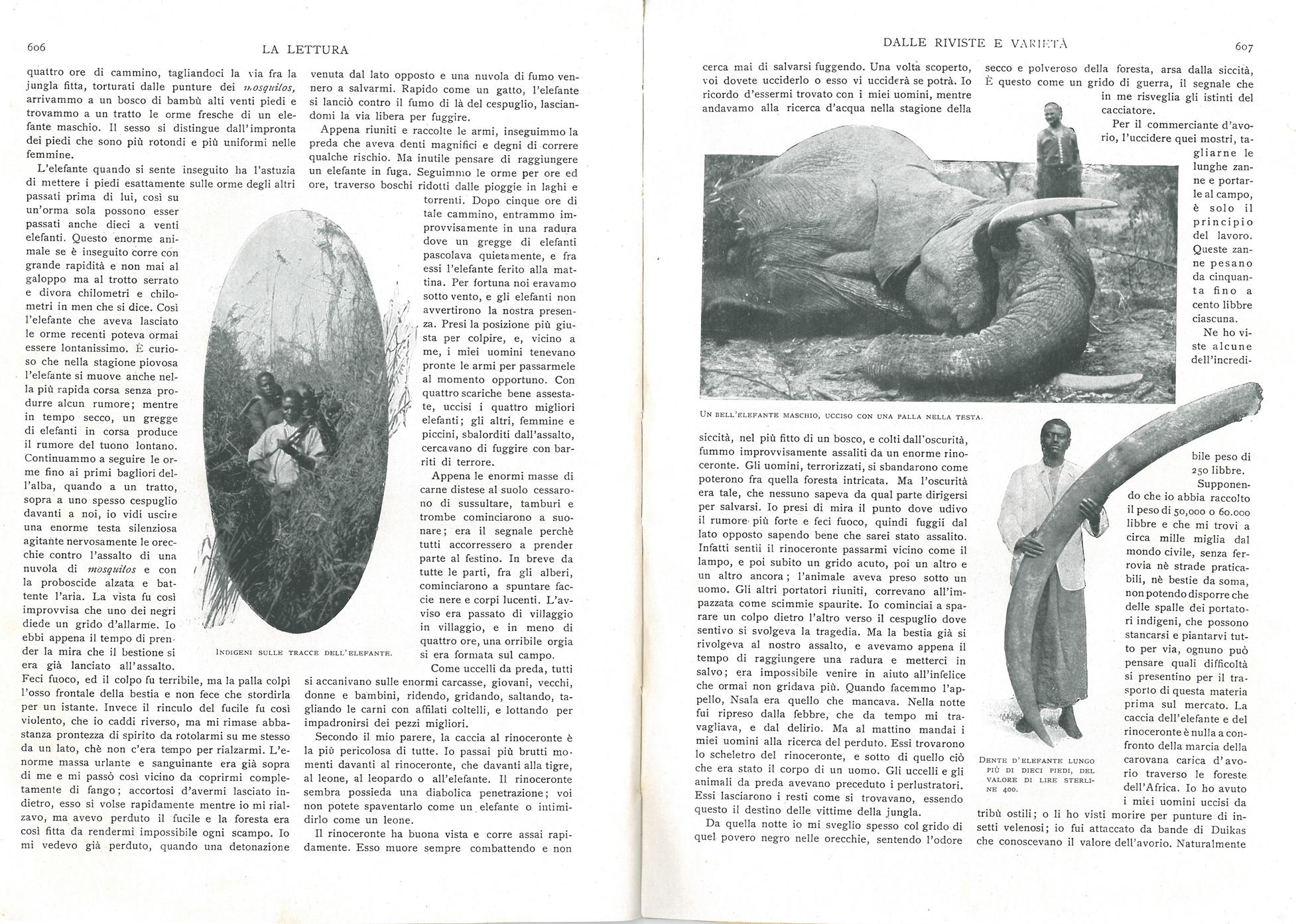 La storia di un cacciatore d'avorio #2